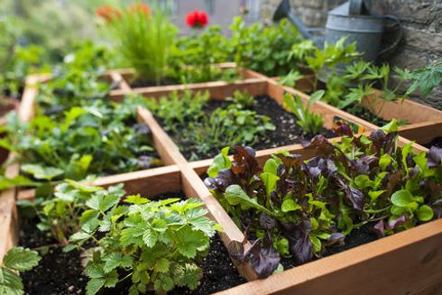 square-foot-gardening-by-planting-flowers-herbs-and-news-photo-584618354-1532960706.jpg