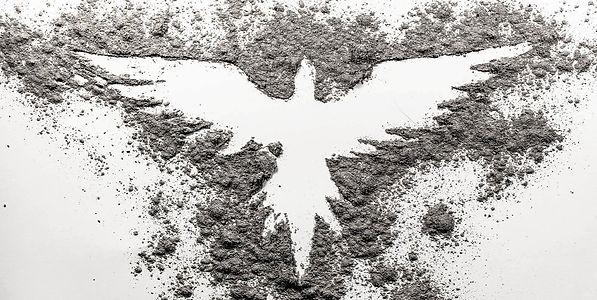 birdash.jpg