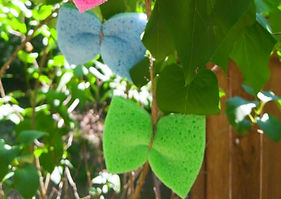 How-to-Turn-a-Sponge-Into-a-Butterfly-Fe