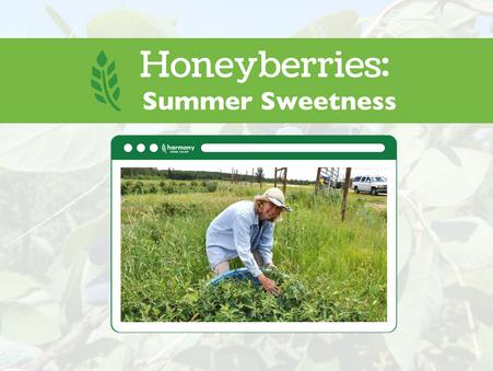 Honeyberries: Summer Sweetness