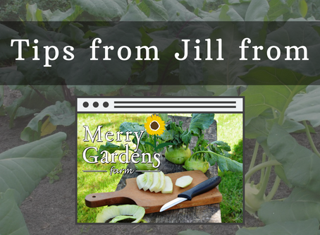 Tips with Jill from Merry Gardens Farm