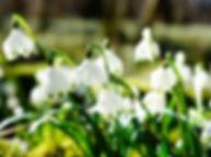 snowflake-275367_1920.jpg