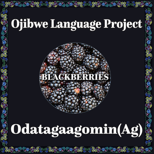 Ojibwe black berry.jpg