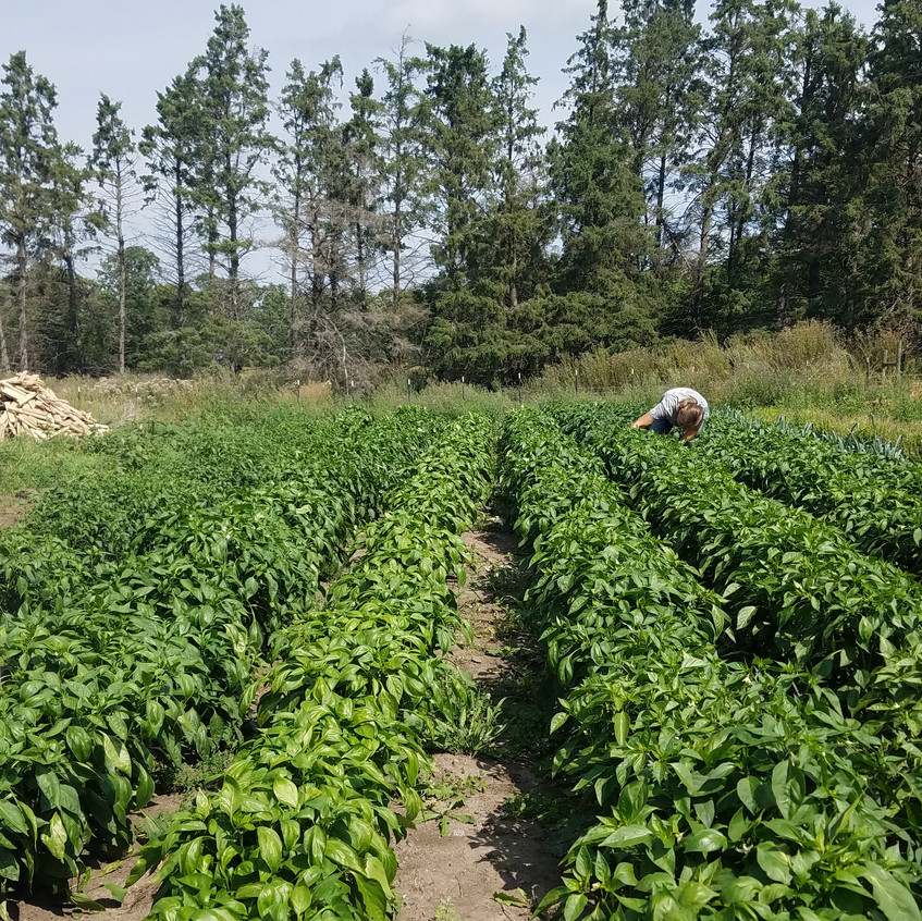 Merry Gardens Farm_Bagley, MN