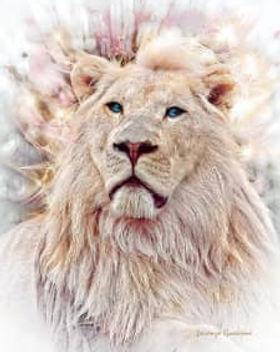 Lion_225.jpg