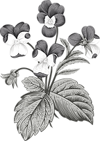 Botany%20%20%20%20_edited.png