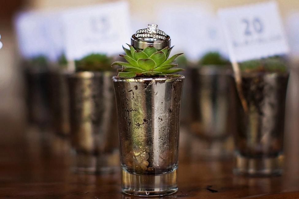 Rings on Succulent.jpg