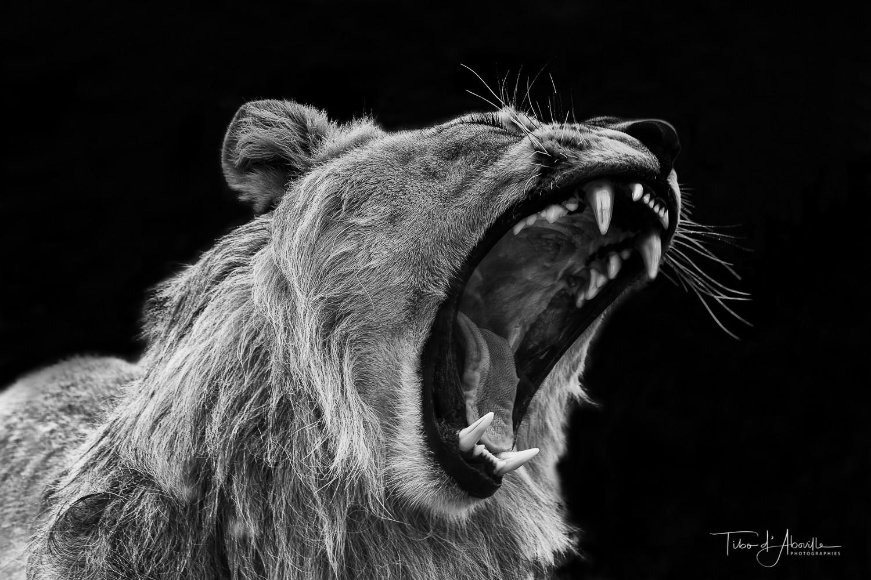 Rebel Lion
