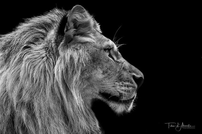 Mi-Lion #1