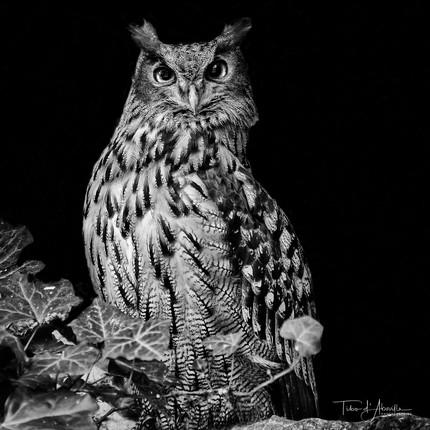 Nocturnal Raptor #4