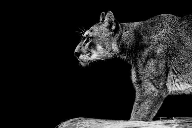 Annah Puma