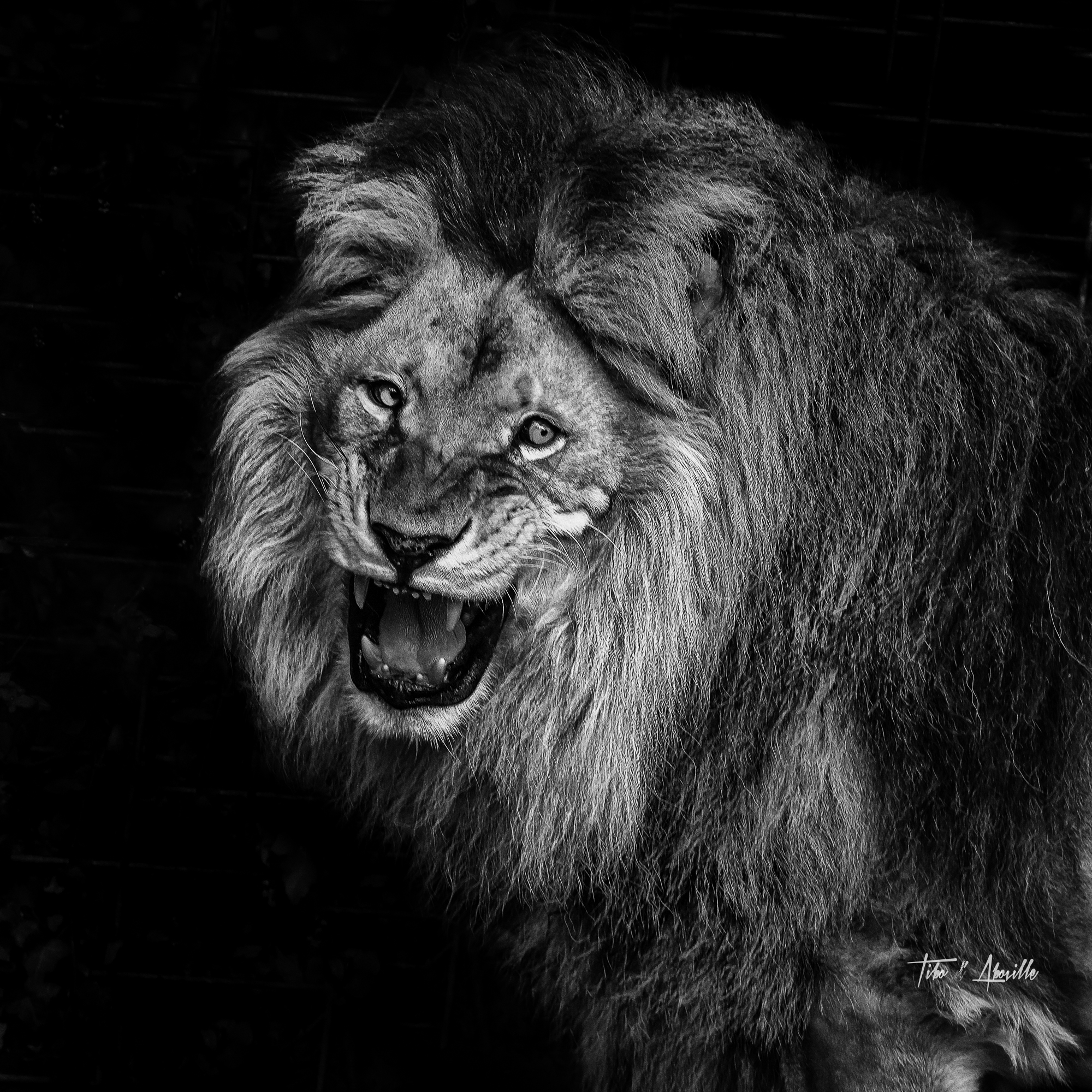 King #6
