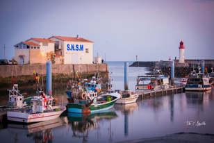 Shrimp Harbour