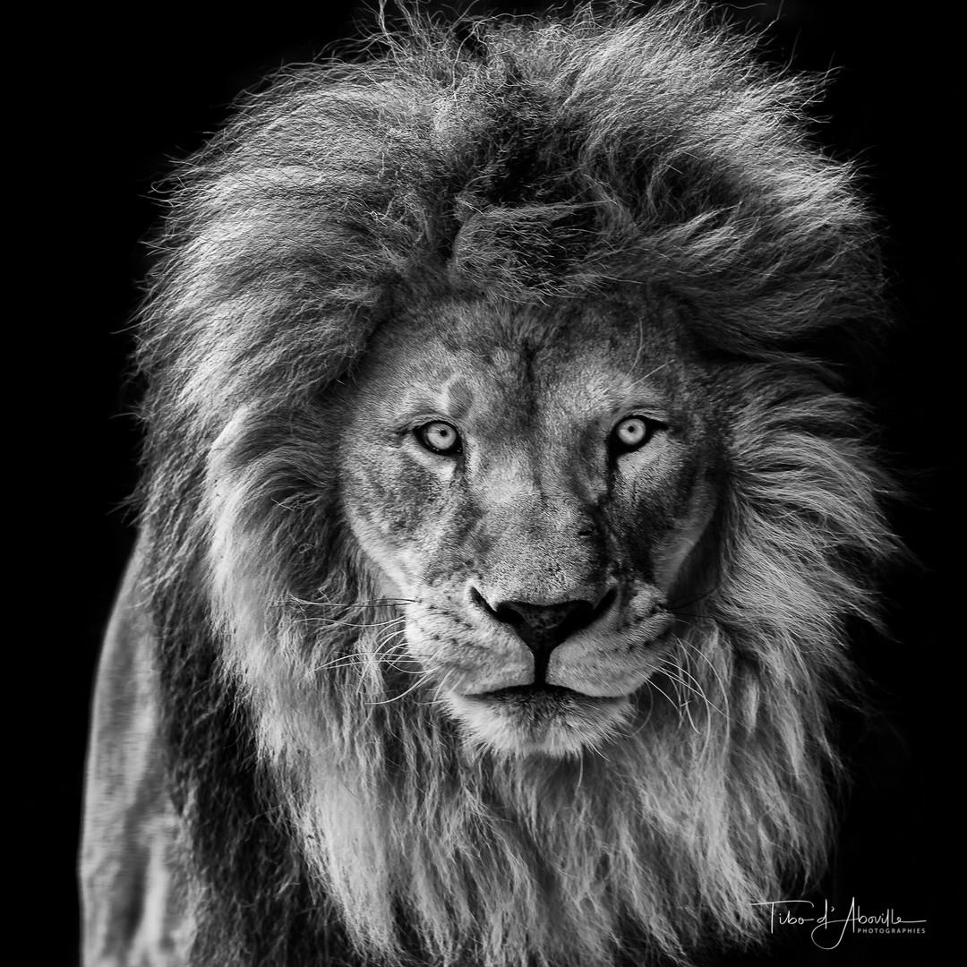 King #5