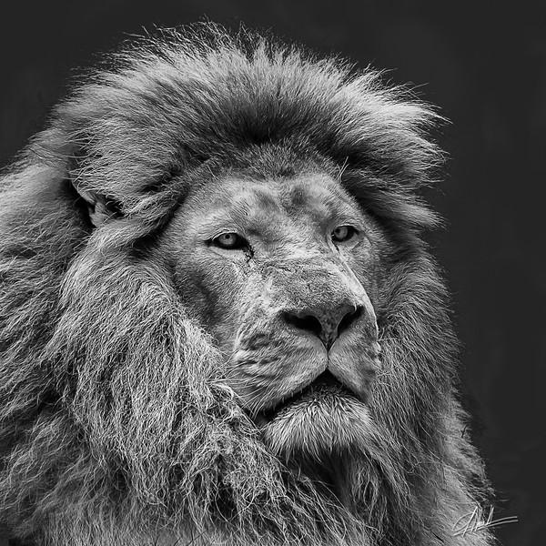 King #2