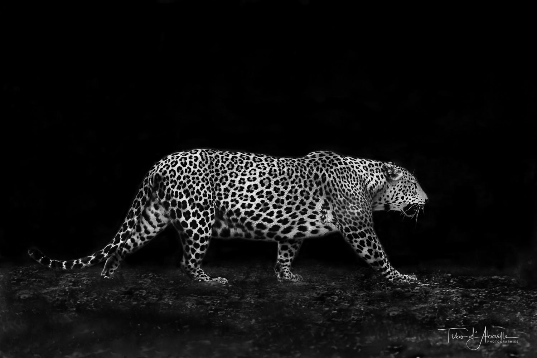 Jaguar, p'tits pas