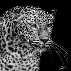 Gimmick Jaguar