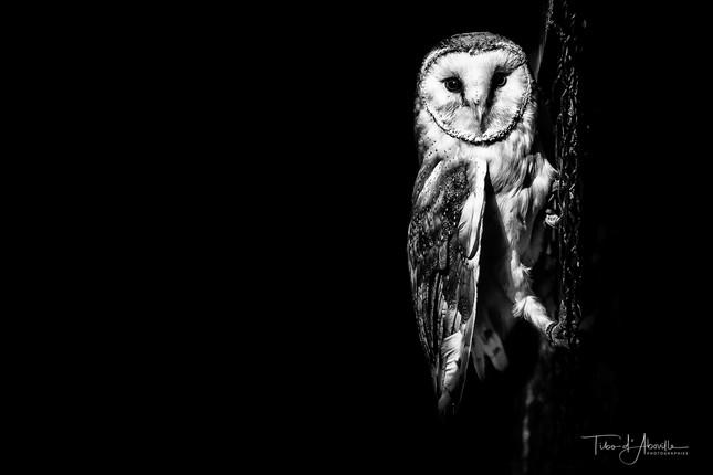 Nocturnal Raptor #5