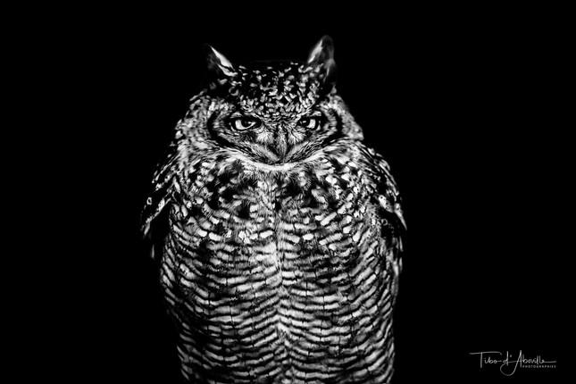 Nocturnal Raptor #1