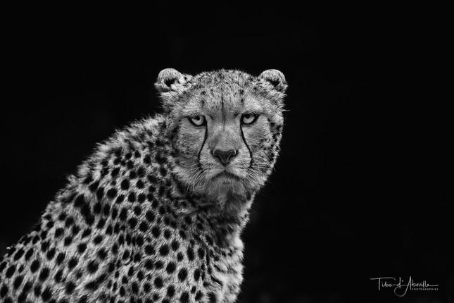 Wildcat Photobooth