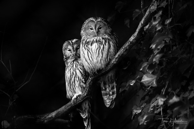 Nocturnal Raptor #12
