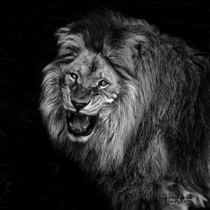 King #15