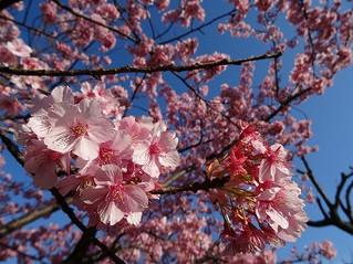 3月~女性にやさしいヨガレッスン aicoco♡yoga ∞ 巡楽のお知らせ