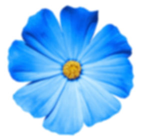 Blume_1.jpg