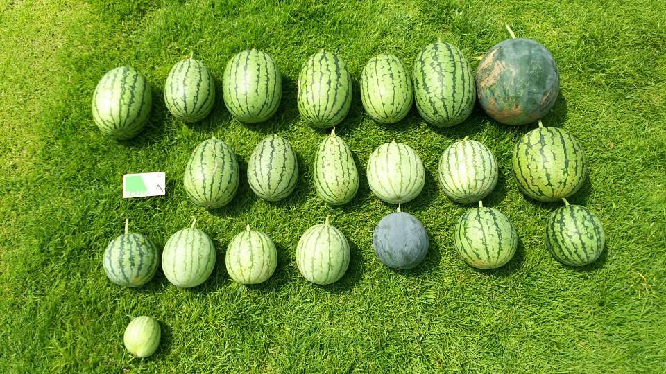 2-1は北千住ルミネ屋上菜園での1回目の収穫