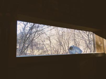 アトリエからの風景。軽井沢の山小屋。