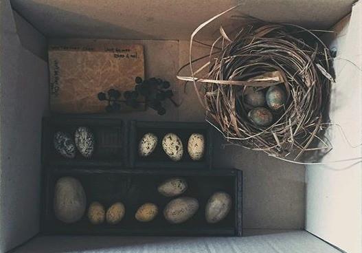 鳥の巣と卵のオーナメントオブジェ