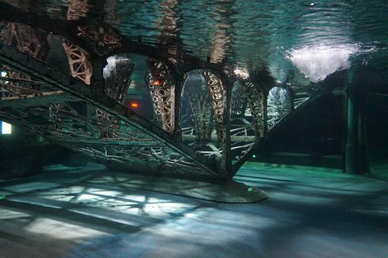 grand-aquarium-de-touraine.jpg