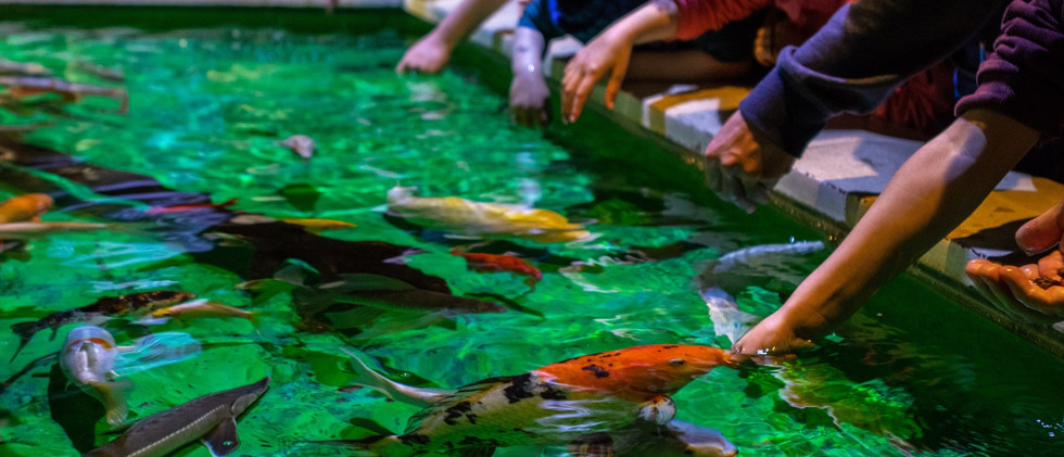 Grand-Aquarium-de-Touraine--2--2.jpg