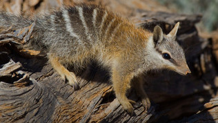 Contributor: Australian Wildlife Conservancy