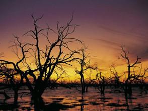 Member: Ecological Society of Australia