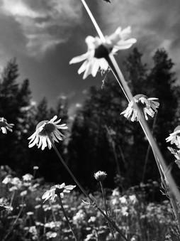 Taryn Richards // Monotone Landscape