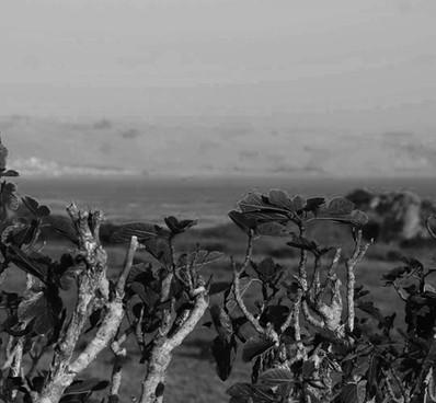 Valentina Shaw // Monotone Landscape