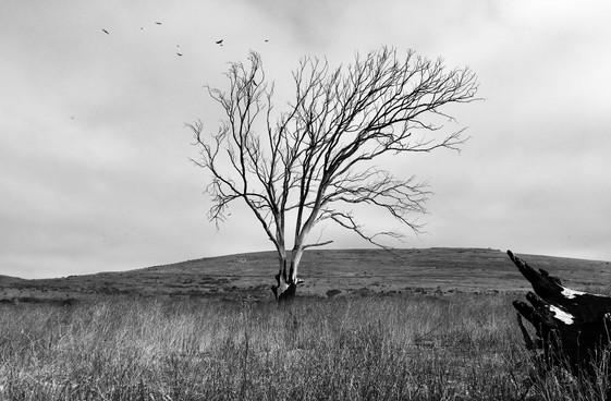 Dakotah Fewell // Monotone Landscape