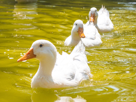 September 2021 Zodiac Sign Horoscope: Get All Your Ducks in A Row!