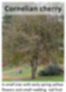 cornelian.jpg