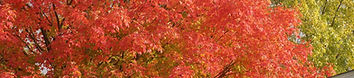 Autumn_Red_Maple_PA040017.jpg