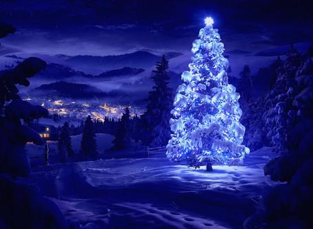 Wonder in the Tree
