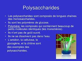 polysaccharides-l.jpg
