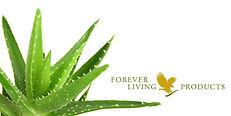 aloe-vera-forever-living-banner.jpg