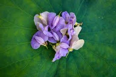 orchidées.jpg