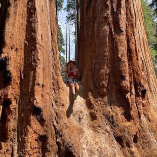 giant seq trees.jpg