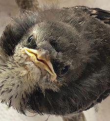 baby bird.jpeg