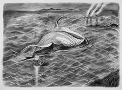 迷途知返 The lost whale 2013