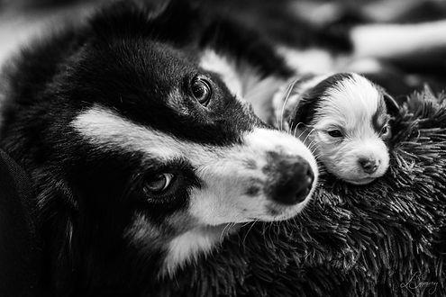 Noir & Blanc-4.jpg