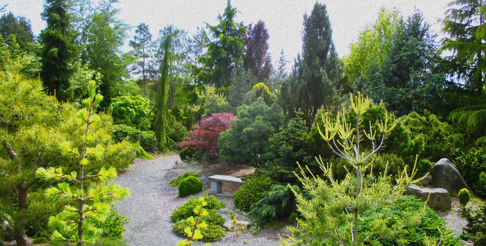 Photo of conifers